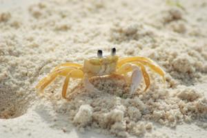 Crab215170_1280